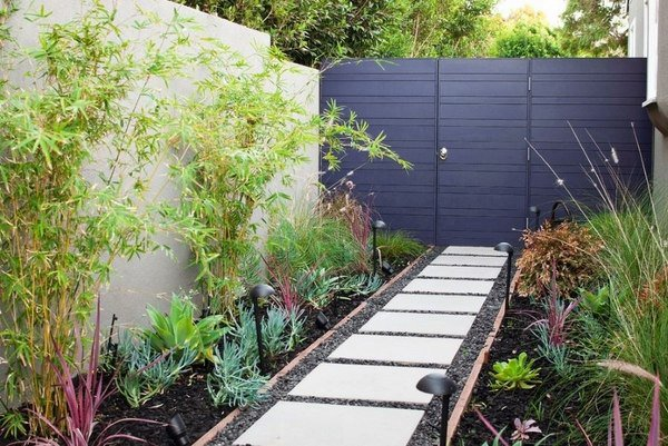 Clumping Bamboo Landscape Privacy Screen And Decoration Ideas