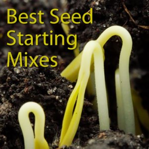 Best Seed Starting Mixes