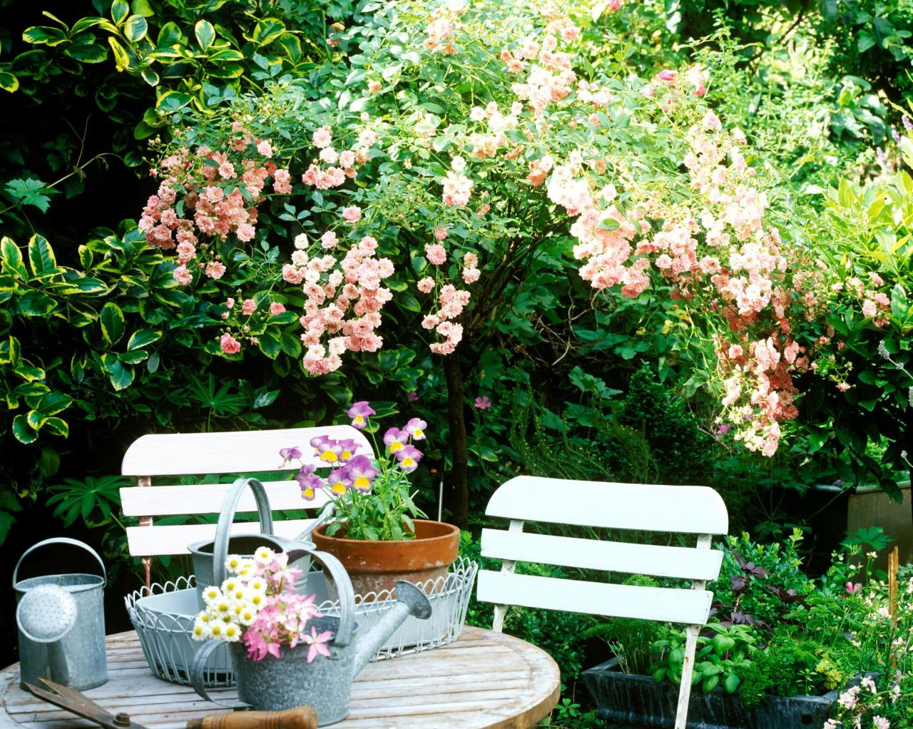 Shade Garden Plants Backyards