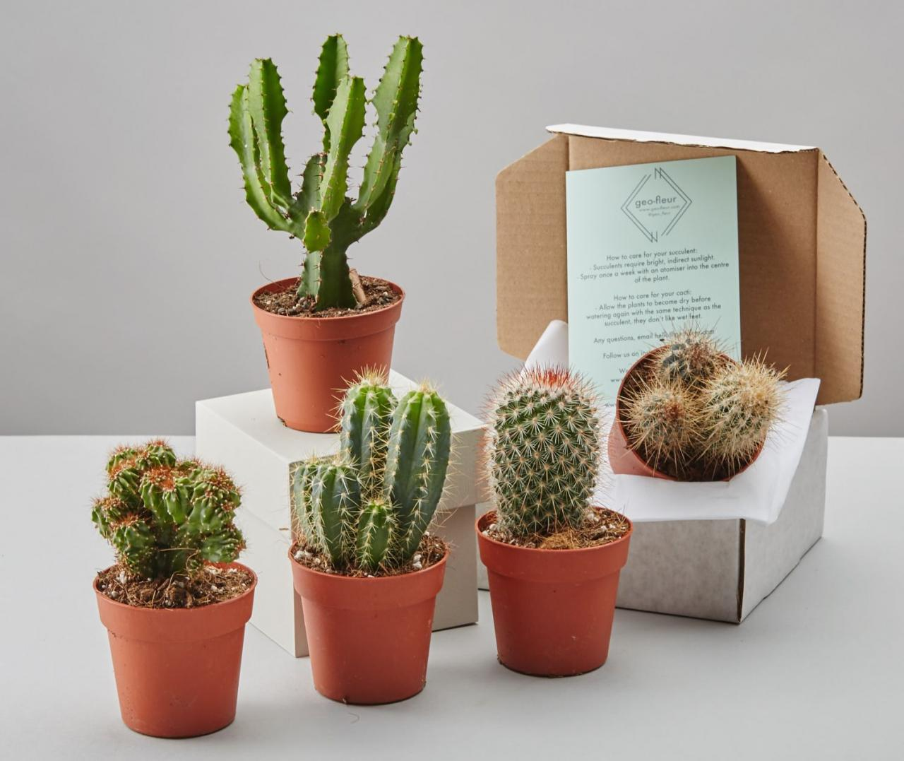 Cacti Selection Box by GEO-FLEUR, £24, Notonthehighstreet.com