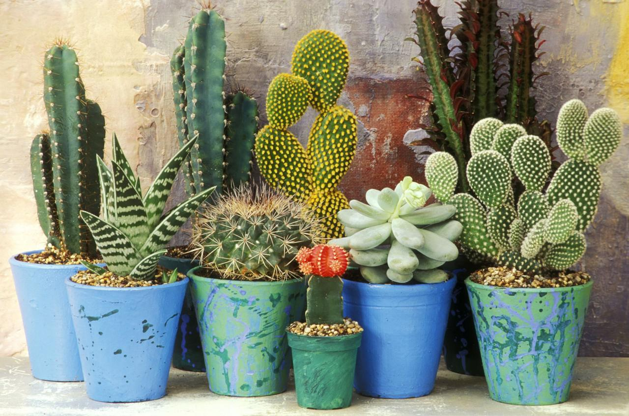 Mixed display of cacti and succulents      mixed display of cacti and succulents